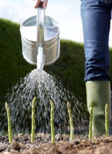 how-to-care-water-fertilize
