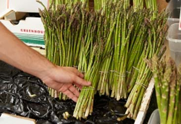 how-to-pick-perfect-asparagus